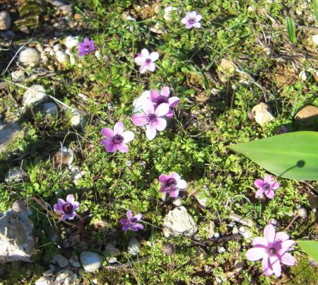 Flowers in Spetses Island, Greece